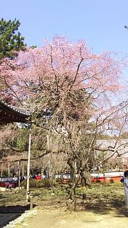 20170402醍醐寺(その78)