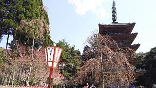 20170402醍醐寺(その81)