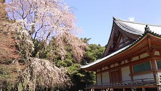 20170402醍醐寺(その91)