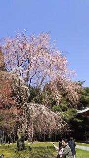 20170402醍醐寺(その92)