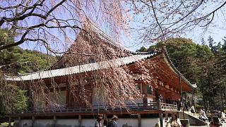 20170402醍醐寺(その93)