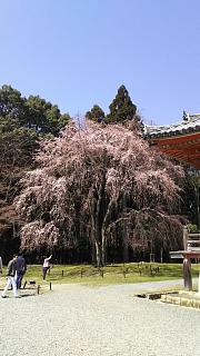 20170402醍醐寺(その95)