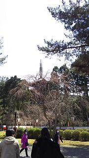 20170402醍醐寺(その96)
