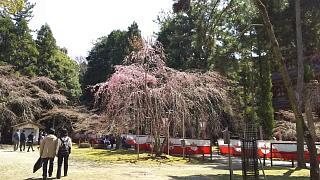 20170402醍醐寺(その97)