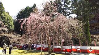 20170402醍醐寺(その99)
