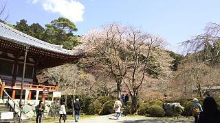 20170402醍醐寺(その101)