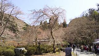 20170402醍醐寺(その102)