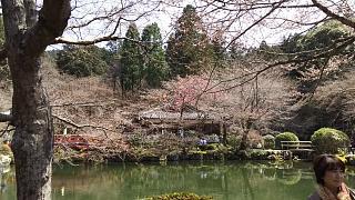 20170402醍醐寺(その103)