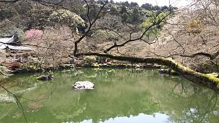 20170402醍醐寺(その105)