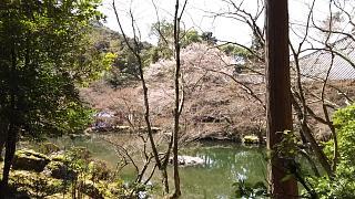 20170402醍醐寺(その106)