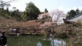 20170402醍醐寺(その107)