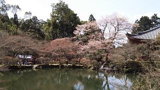 20170402醍醐寺(その108)