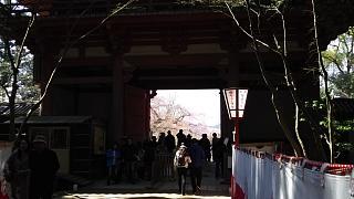 20170402醍醐寺(その118)