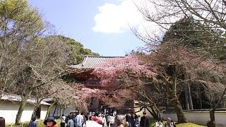 20170402醍醐寺(その121)