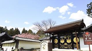 20170402醍醐寺(その122)