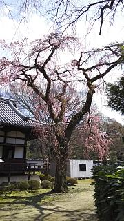 20170402醍醐寺(その123)
