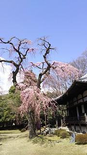 20170402醍醐寺(その124)