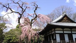 20170402醍醐寺(その125)