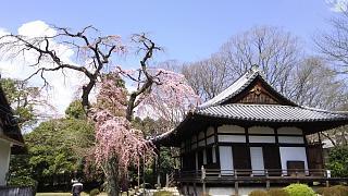 20170402醍醐寺(その126)
