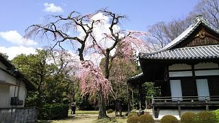 20170402醍醐寺(その127)