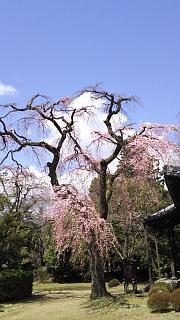 20170402醍醐寺(その128)