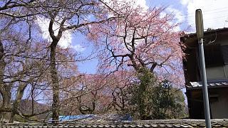 20170402醍醐寺(その129)