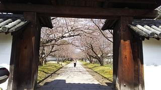 20170402醍醐寺(その130)