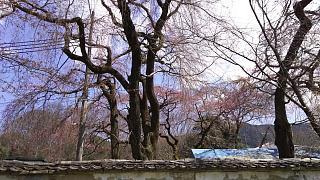 20170402醍醐寺(その132)