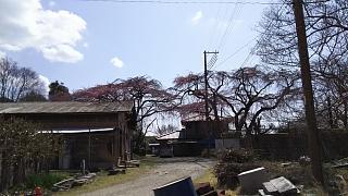 20170402醍醐寺(その133)