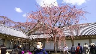 20170402醍醐寺(その135)