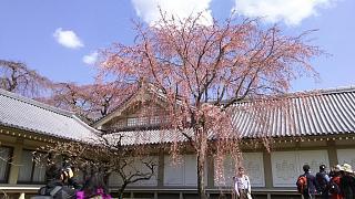 20170402醍醐寺(その136)