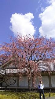 20170402醍醐寺(その137)