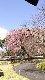 20170402醍醐寺(その139)