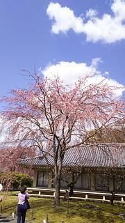 20170402醍醐寺(その141)