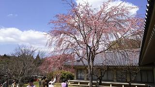 20170402醍醐寺(その142)