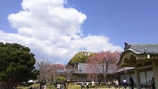 20170402醍醐寺(その143)