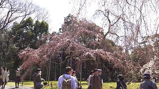20170402醍醐寺(その144)