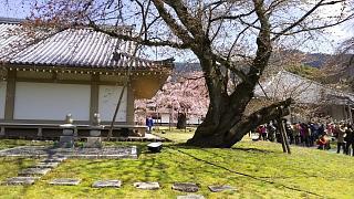 20170402醍醐寺(その145)