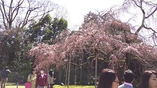 20170402醍醐寺(その146)
