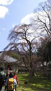 20170402醍醐寺(その147)