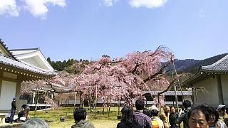 20170402醍醐寺(その148)
