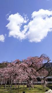 20170402醍醐寺(その149)