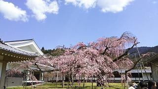 20170402醍醐寺(その150)