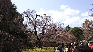 20170402醍醐寺(その151)