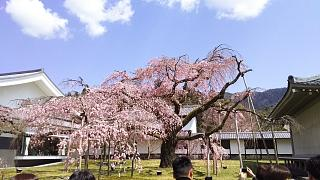 20170402醍醐寺(その152)