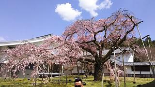 20170402醍醐寺(その154)