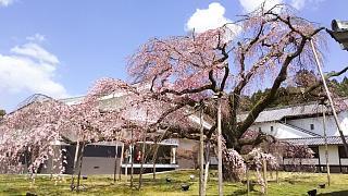 20170402醍醐寺(その158)