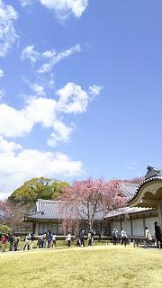 20170402醍醐寺(その166)