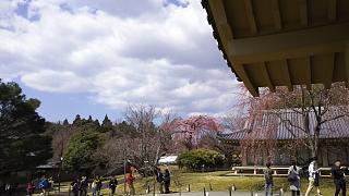20170402醍醐寺(その167)