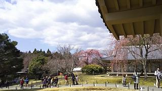 20170402醍醐寺(その168)